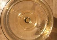 Il vino: un antidoto culturale