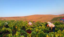 I volti nuovi del vino marsalese