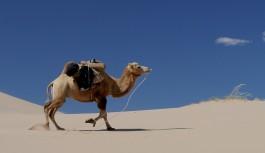 Un coccodrillo per un cammello (dentro una grondaia) – Parte prima