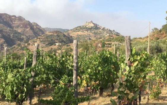 Bovesia: minoranze viticole